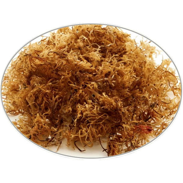 Irish Moss in 5Kg (11LB) bag - Brewing Spices -