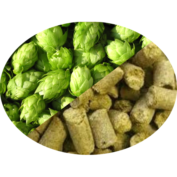 Buy-Achat-Purchase - Hop Rakau Organic (NZ) pellets in 5 kg(11LB) bag - Brewing Hops -