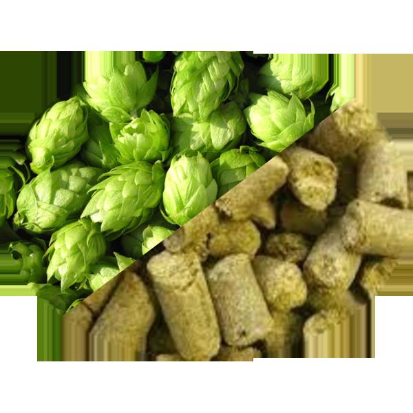 Buy-Achat-Purchase - Hop Barbe Rouge (FR) in Pellets T90 in 5 kg(11LB) bag - Brewing Hops -